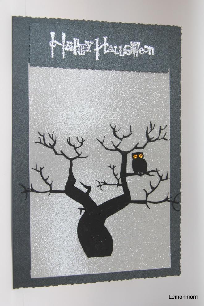 Sówka na drzewie